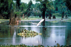 Some of Louisiana's beautiful scenery that can be seen on an airboat ride with Airboat Adventures.