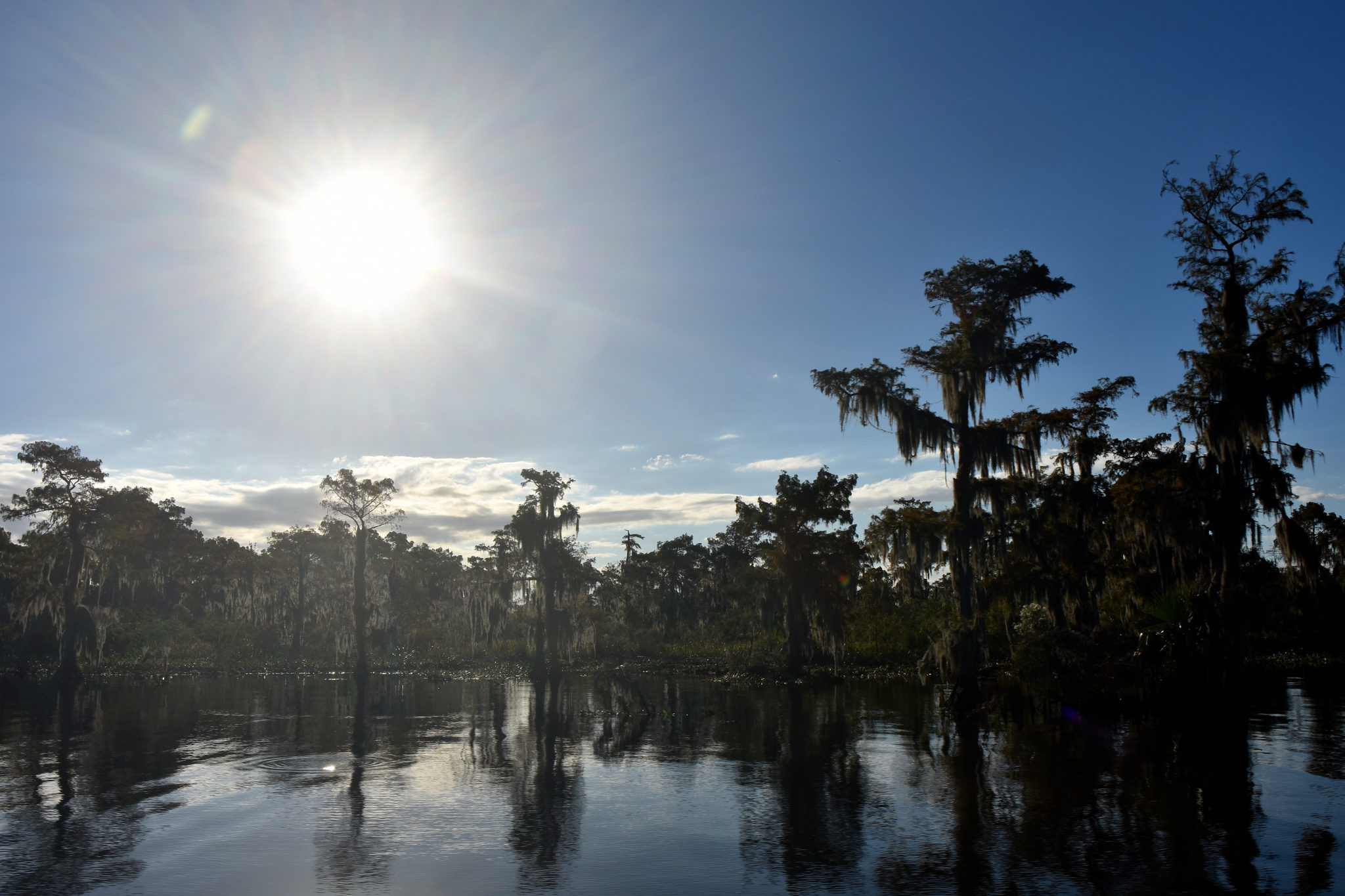 tours in new orleans, swamp tours in new orleans
