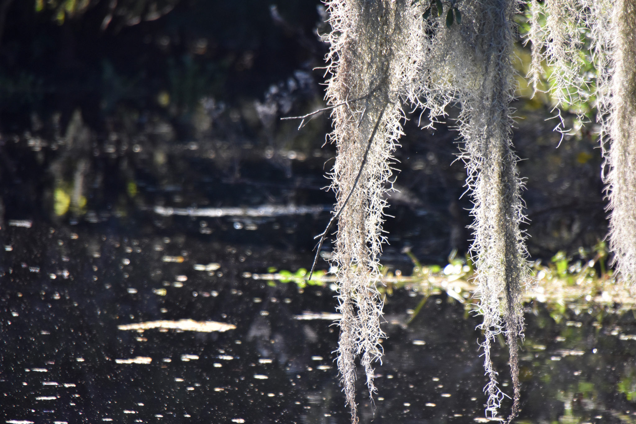 Airboat Tour Archives | Airboat Adventures